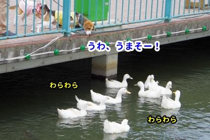 りんどう湖 3