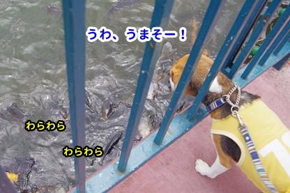 りんどう湖 2