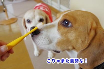 歯磨き 2