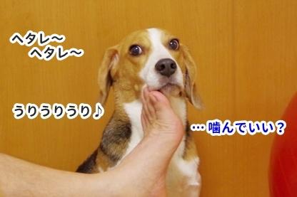 花火 10