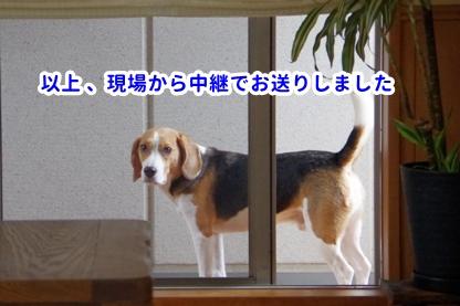 ニュース 4