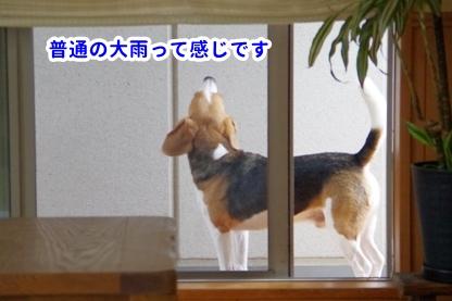 ニュース 3