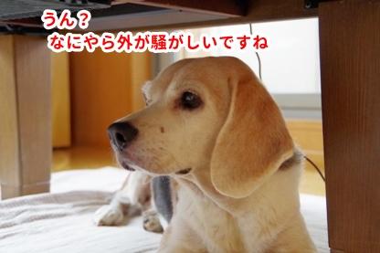ニュース 8