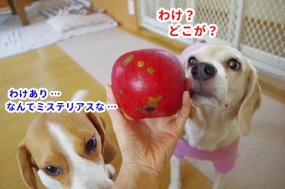 りんご 5