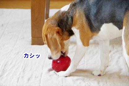 りんご 12