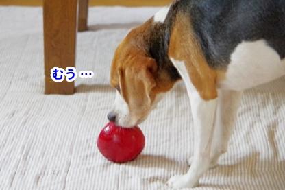 りんご 9