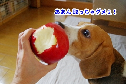 りんご 14