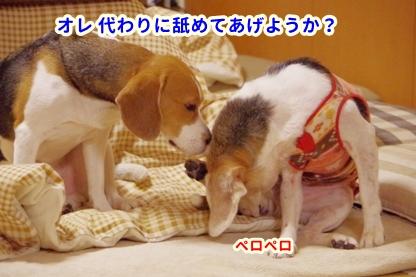 ちれちれ 3