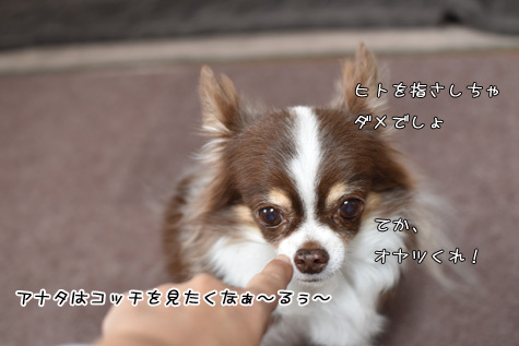 DSC020011111.jpg