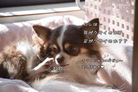 DSC05521202.jpg