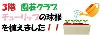 161003本館3階 園芸クラブ (3)