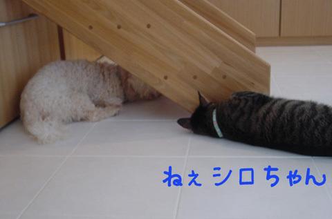 124945083711216206738_mimishiro1.jpg
