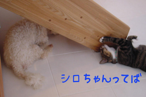 124945342572516416739_mimishiro2.jpg