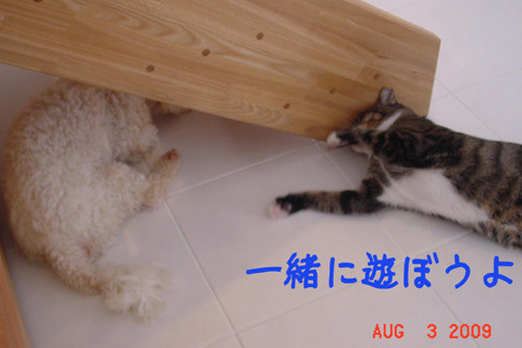 124945349080616102609_mimishiro3.jpg