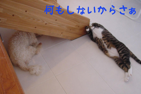 124945353370216316645_mimishiro4.jpg