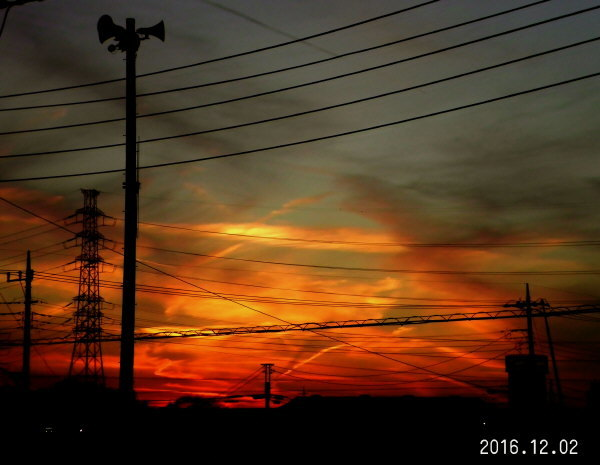 花ブ20161208-3
