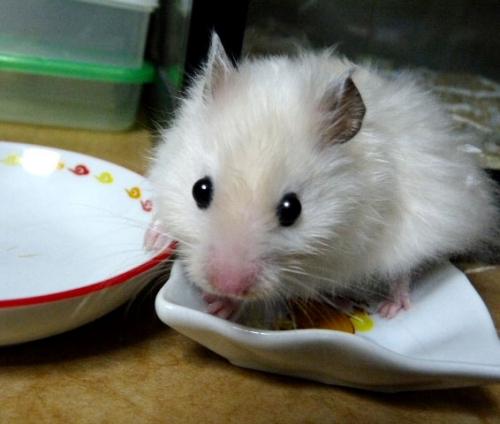 もちこ~皿4