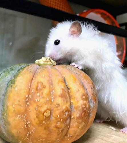 もちこ~かぼちゃ3
