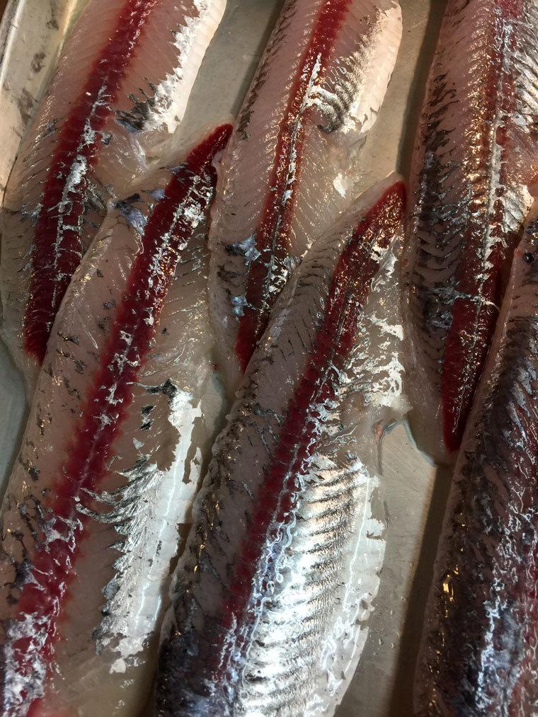 トビ魚-3