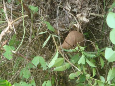 ハチの巣発見