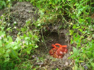 ドングリを埋める