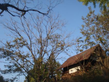 冬の準備のクルミの木
