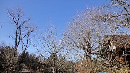 青い空と冬の栗山