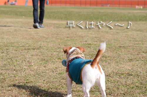 2016-12-17-ドッグラン-028