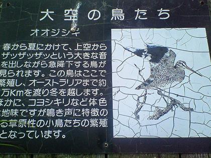 サロベツ原生花園