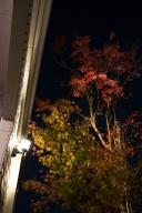 我が家の紅葉ライトアップ 2016