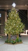 2016年12月クリスマスツリー