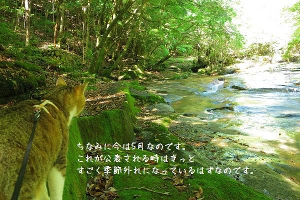 藤河内渓谷3