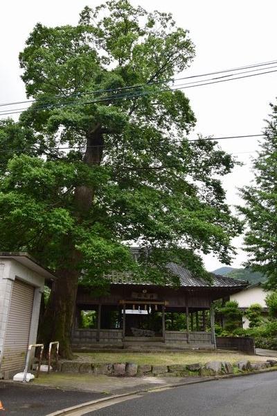280612 藤袴植栽1