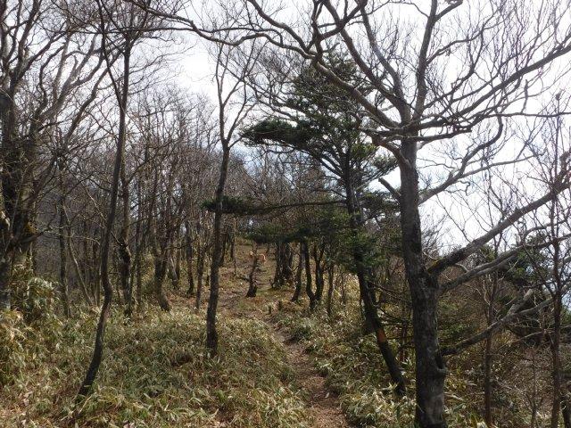 2016-4-12本栖 竜ヶ岳 171