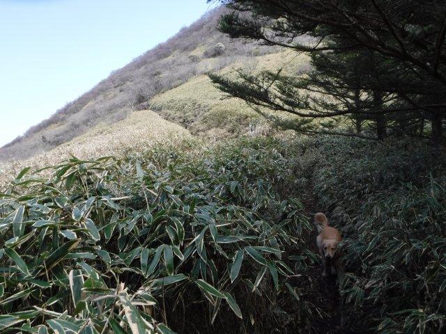 2016-4-12本栖 竜ヶ岳 176