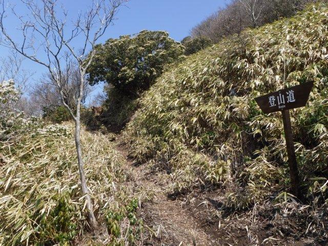 2016-4-12本栖 竜ヶ岳 188