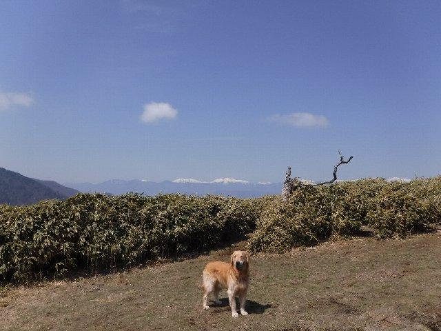 2016-4-12本栖 竜ヶ岳 231