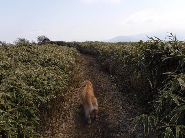 2016-4-12本栖 竜ヶ岳 237
