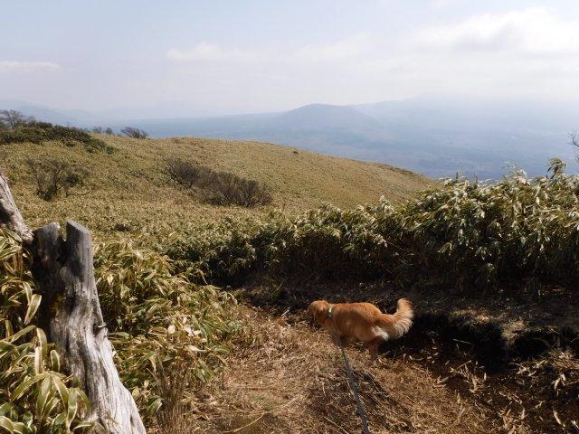 2016-4-12本栖 竜ヶ岳 241