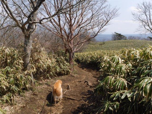 2016-4-12本栖 竜ヶ岳 253
