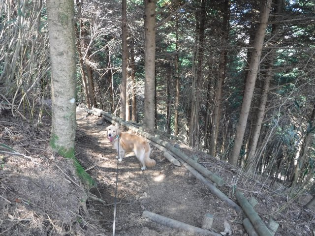 2016-4-12本栖 竜ヶ岳 280