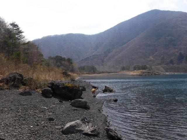 2016-4-12本栖 竜ヶ岳 322