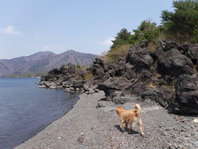 2016-4-12本栖 竜ヶ岳 324