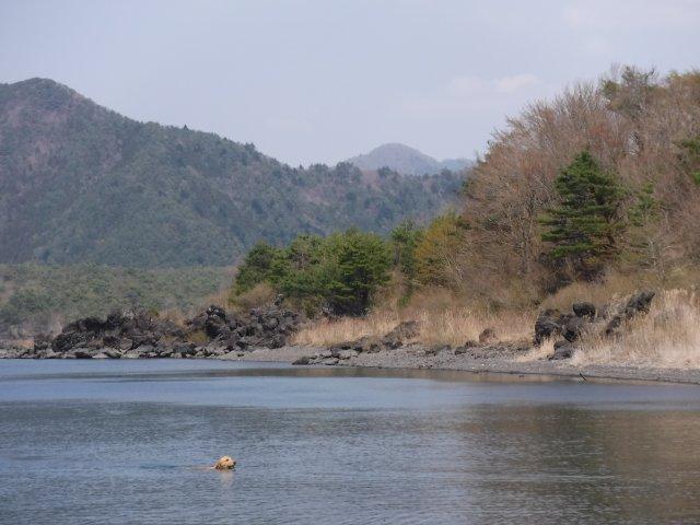 2016-4-12本栖 竜ヶ岳 335