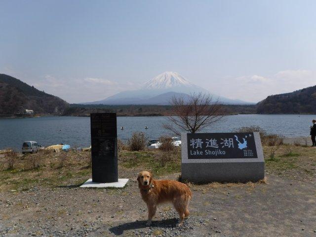 2016-4-12本栖 竜ヶ岳 349