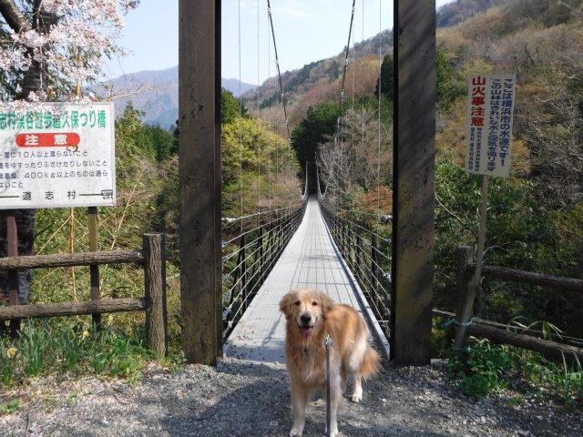 2016-4-12本栖 竜ヶ岳 355