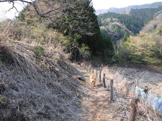 2016-4-12本栖 竜ヶ岳 393