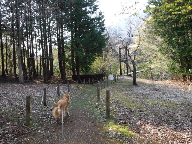 2016-4-12本栖 竜ヶ岳 394