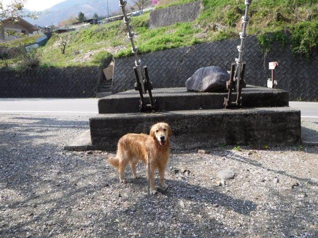 2016-4-12本栖 竜ヶ岳 400