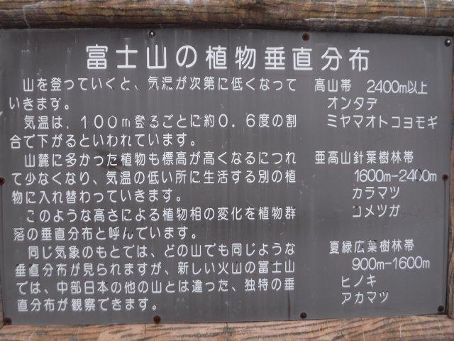 御道中 大沢崩れ 2016.5.20 058